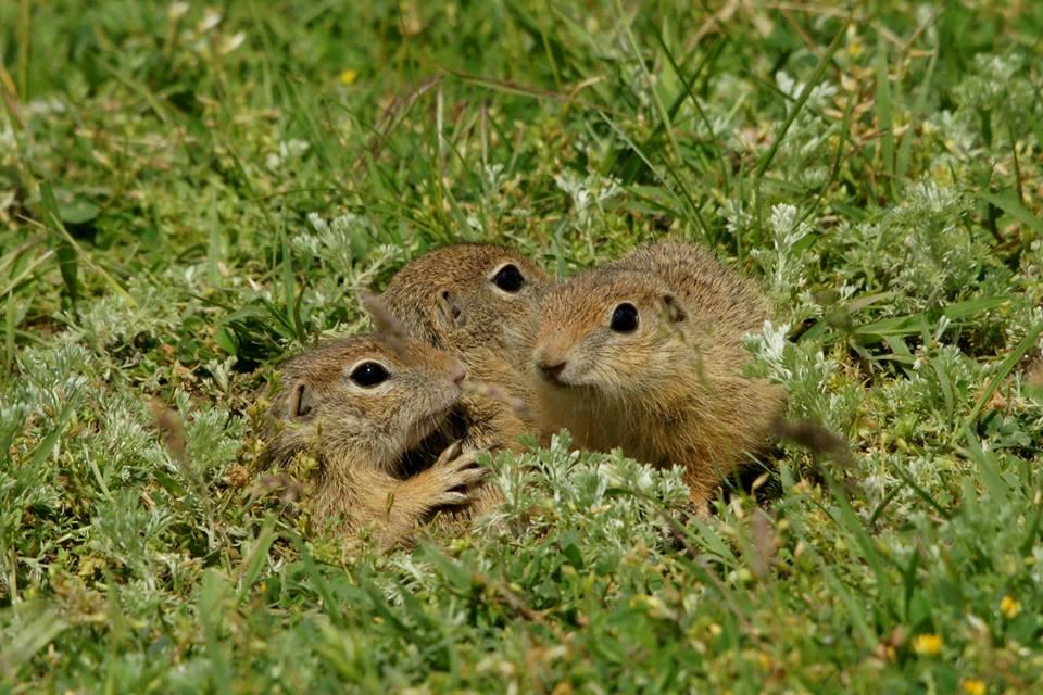 blogosfera de natura - popandai in macin