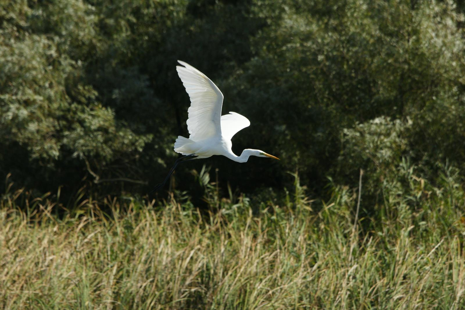 resizewildlife top foto codalbi wildlife DSC02848_1600x1067