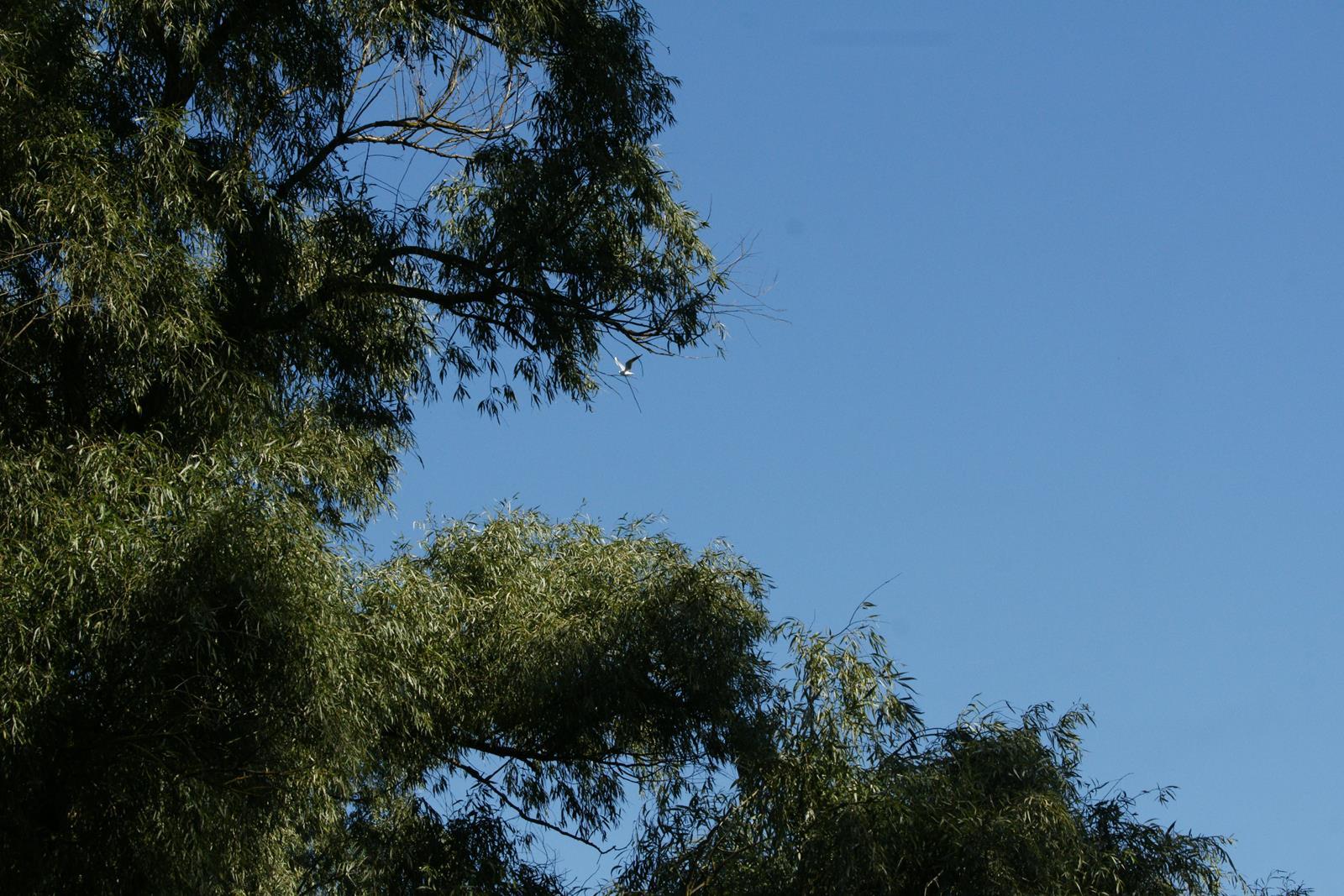 resizewildlife top foto cormorani wildlife DSC02424_1600x1067